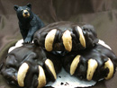 Black Bear Paws